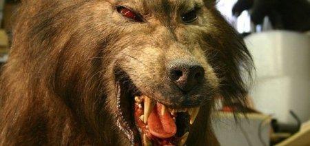 news-werewolf